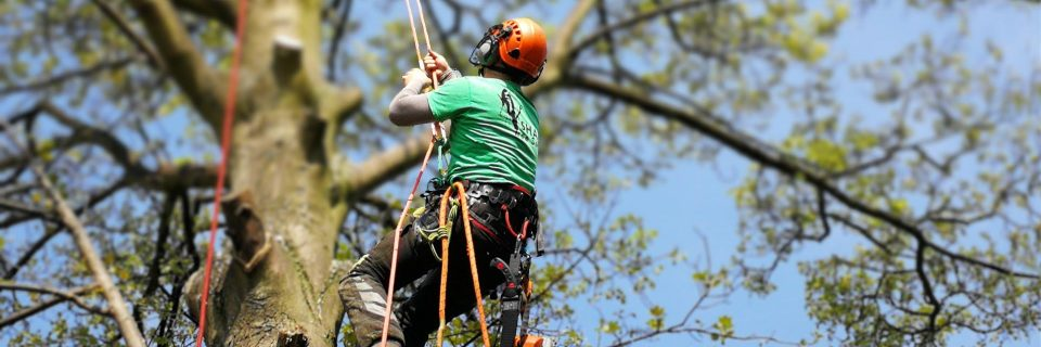 Reliable tree surgeon covering Sheffield and surrounding areas...